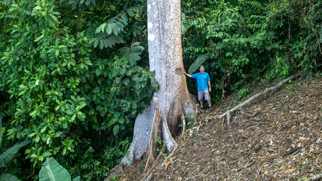 Virgin Jungle Surroundings