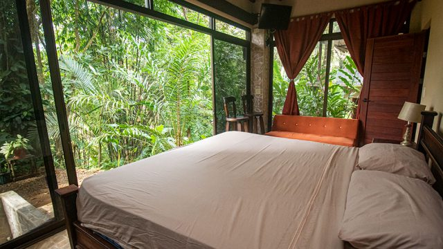 Jungle Serenity