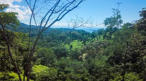 Over 34 Acres with Multiple Building Sites and Ocean Views Above Uvita