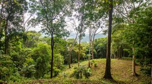 Private Rainforest Property in Lagunas with Legal Water and Electricity