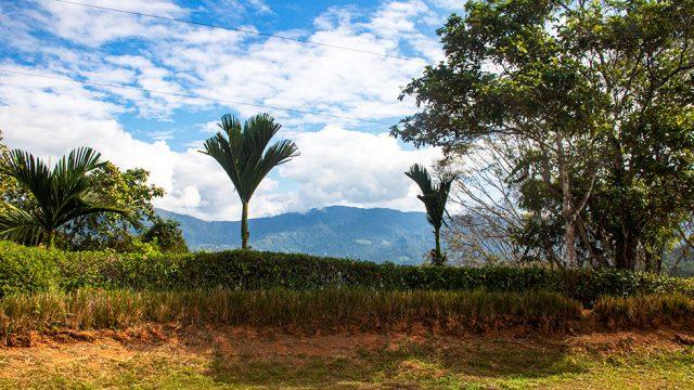 Perfect Climate in Platanillo