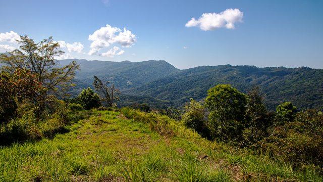 Cacao Ridge Community