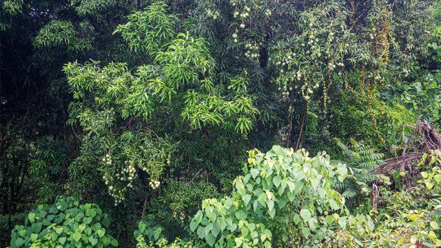 Fruit Bearing Trees