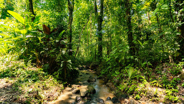 Lush Rainforest Setting
