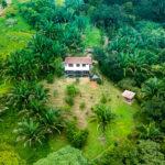 Private Rainforest Setting