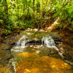 Bordering a Creek