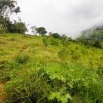 Cool Mountain Breezes