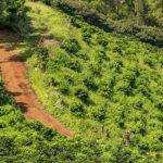 Hiking and Biking Trails