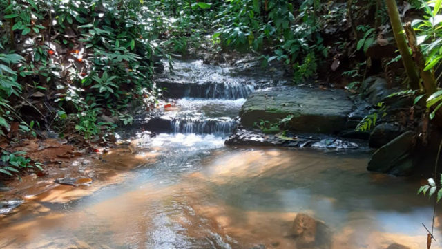 Year-Round Creek