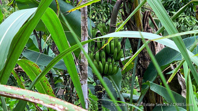 Organic Food Forest