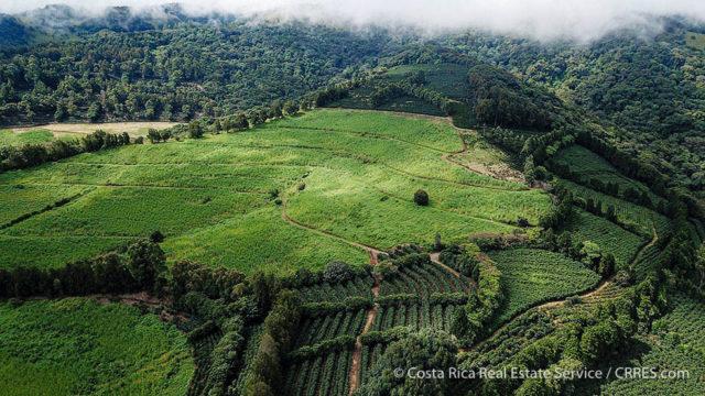 99-Acres of Sugarcane