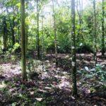 Organic Farmable Land
