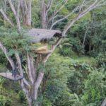 Unique Treehouse