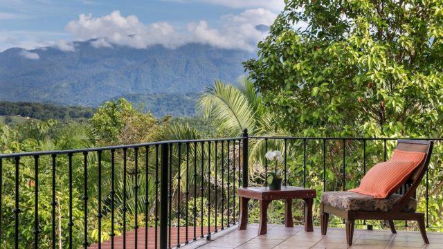 Beautiful Rainforest View