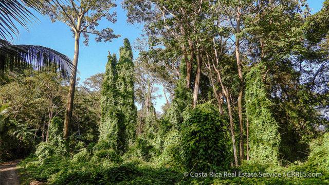 Incredible Rainforest Setting