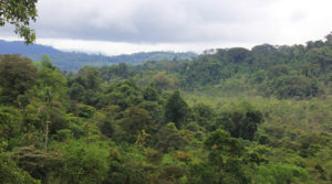 Large Conservation Farm in Golfito with Two Homes