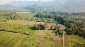 Large Flat Farm South of Ojochal Perfect for Commercial Usage