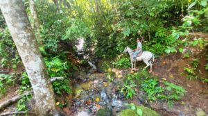 Large Farm with Waterfalls and Riverfront in Platanillo