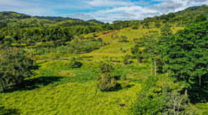 Large Affordable and Accessible Horse Farm Near San Isidro